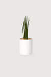 Slim Ceramic Planter 2946 White Print 6