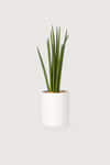 Slim Ceramic Planter 2946 White 1