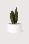 Wide Ceramic Planter 2947 White 1