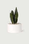 Wide Ceramic Planter 2947 White 1